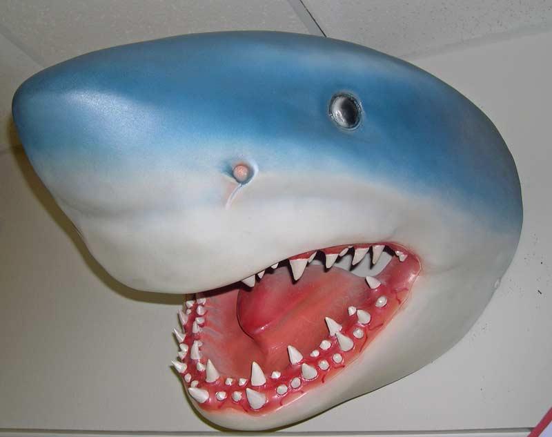 Shark Head In Fun Stuff